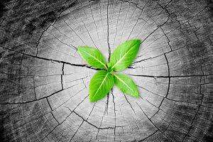 Regenerationsfähigkeit-und-Resilienz