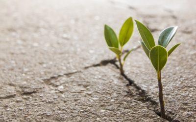 Was ist Resilienz und was ist es nicht?