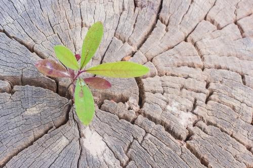 Die Kraft der Resilienz