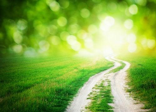 Grüner Weg - Resilienz-Akademie