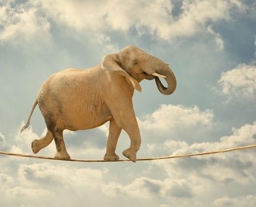 Elefant auf dem Hochseil - Resilienz