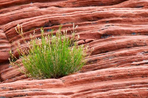 Resiliente Pflanzen