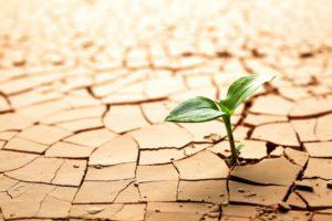 Hormesis und Resilienz