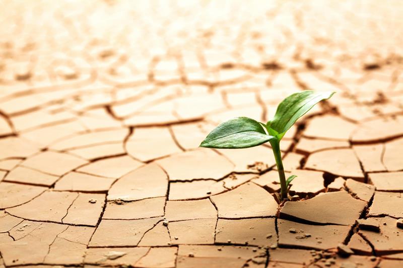 Pflanze wächst in der Wüste - Hormesis und Resilienz