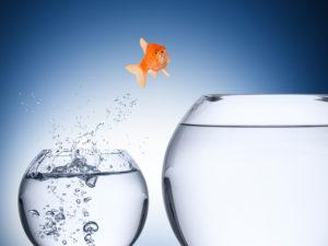 Es braucht Mut zur Adaptabilität
