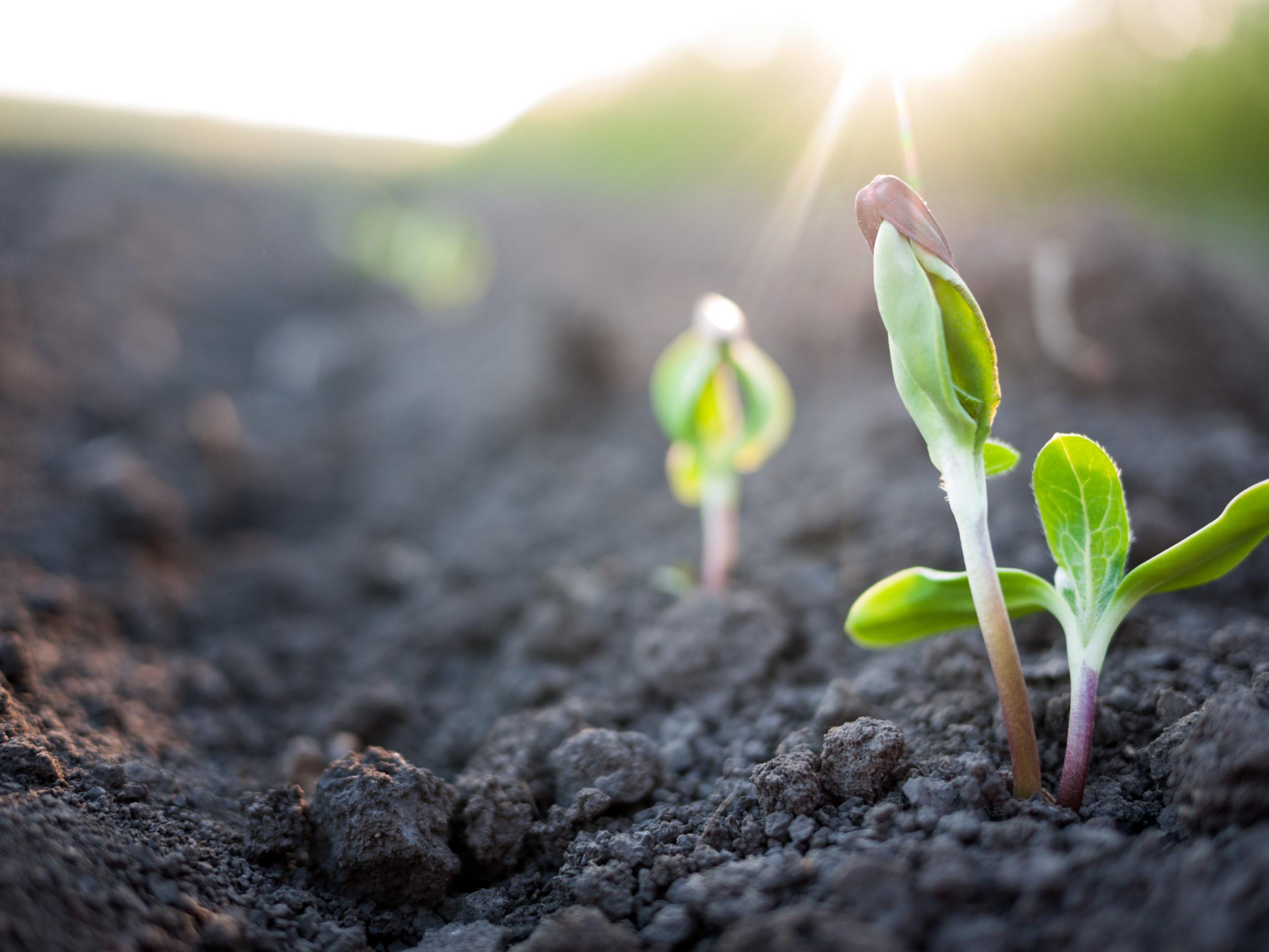 Wachsende Pflanze Resilienz